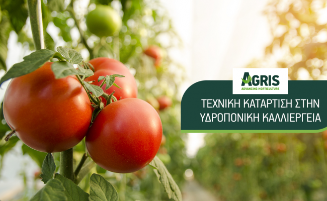 Πρόγραμμα κατάρτισης στην υδροπονική καλλιέργεια τομάτας σε συνεργασία με το ΑΠΘ