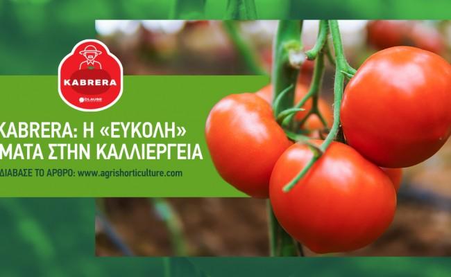 Kabrera: Η «εύκολη» τομάτα στην καλλιέργεια