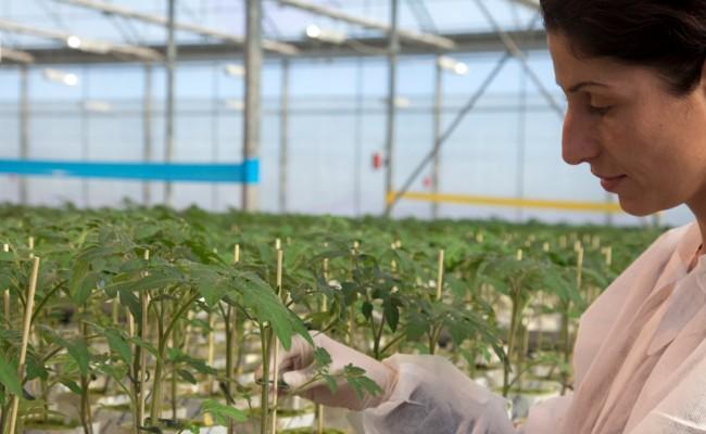Προάγοντας τη Λαχανοκομία: Η συμβολή της AGRIS στην ανάπτυξη του κλάδου