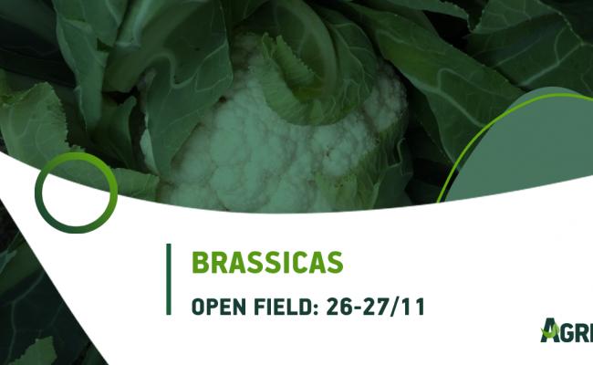 Παρουσίαση νέων Brassicas στο Open Field της AGRIS