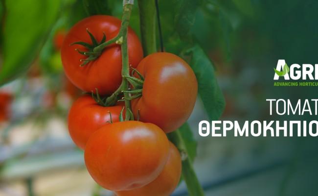 Καλλιέργεια τομάτας θερμοκηπίου: Από την προετοιμασία ως τη θρέψη